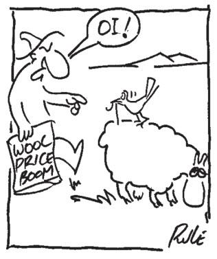 Wool Price Boom